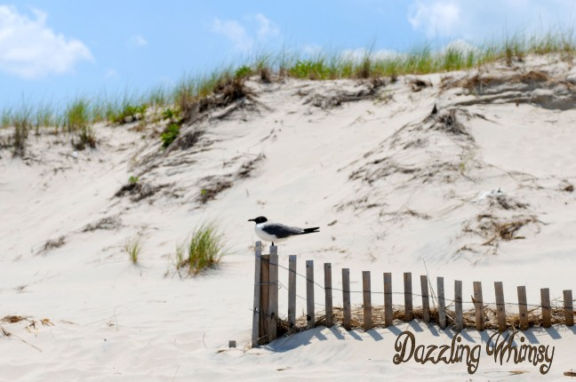 seagull-fence-beach
